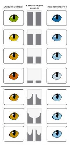 Цвет глаз кошек Tablicca_ccvet_glaz